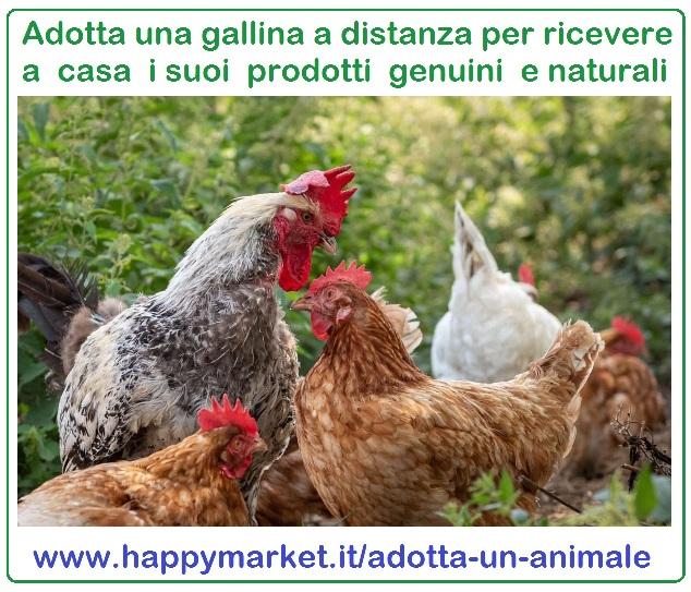 Offerte di prodotti per animali - Cola di Rienzo